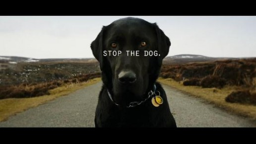 Stop the Dog